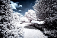 Infrared Beauty